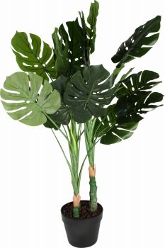 Potted 100cm Monstera Plant