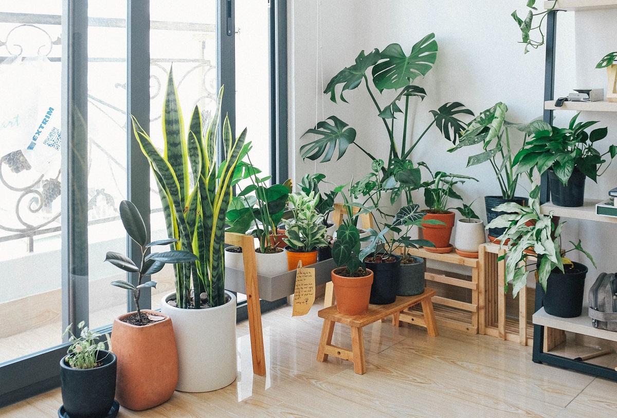 Indoor Plant Decor: Things to consider